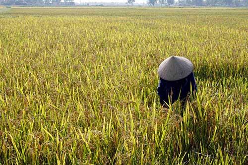 美媒体评出全球最快乐的10个地方 越南上榜(组图)