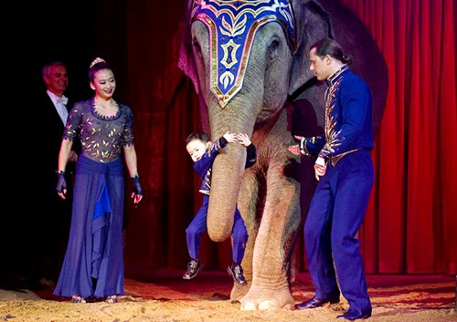 &nbsp;&nbsp;&nbsp;<strong>嫁入瑞士国家马戏团的中国姑娘</strong><br/>&nbsp;&nbsp;&nbsp;来自大连的女孩不仅将精湛的杂技艺术带给科尼,还为科尼家族的长子带来了异国爱情。<font color=#ff0000>详细>></font>