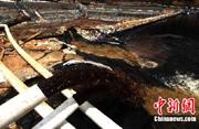 紫金矿业泄漏污染汀江