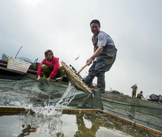 中国最大淡水湖鄱阳湖春季禁渔期结束