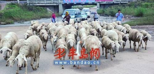 放羊的白鹅 - liblog - Liblog 第九传媒
