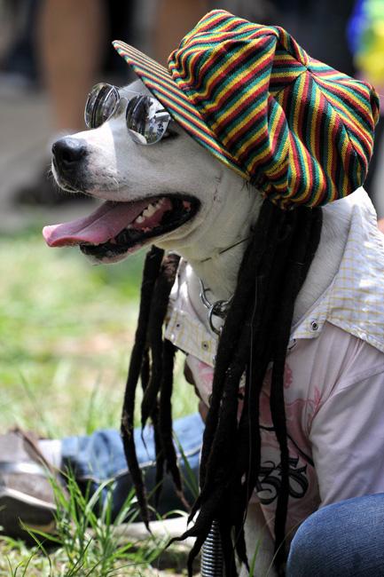 宠物也玩时尚——哥伦比亚宠物节 酷狗齐登场