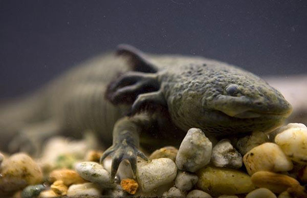 盘点地球上最不可思议的怪动物 让人瞠目结舌(组图)