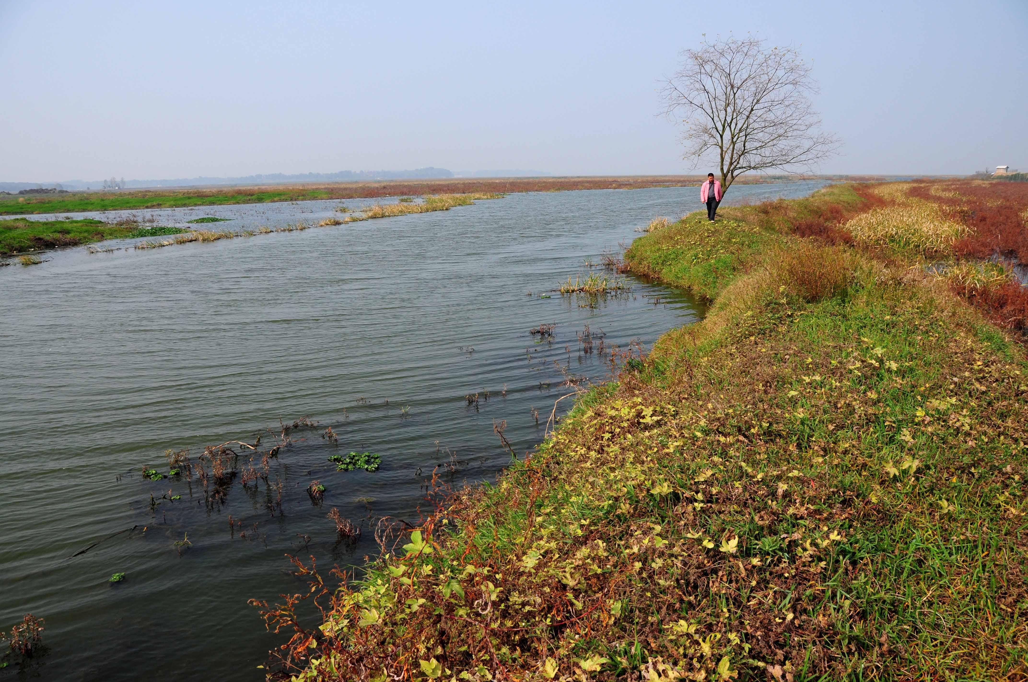 梁子湖湿地一角。新华社记者 杜华举 摄