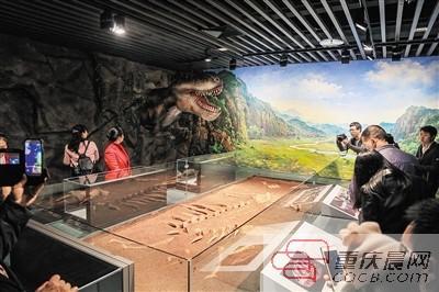 从发现到挖掘,夫妻守护宝峰龙化石14年