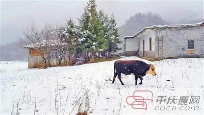 昨天立冬高山地区下了雪 今天各地或迎来晴好天气