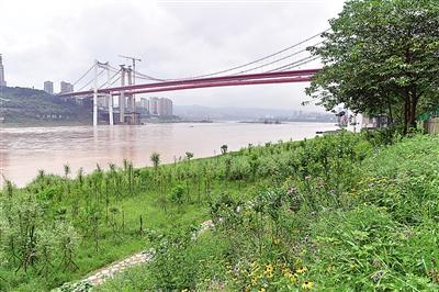 重庆:九滨路消落带成休闲好地方